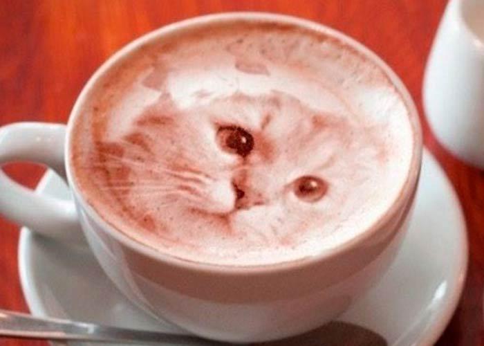 Кофе с изображением кота